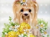 "Yorkie in Daisies   Fabric Block  5"" x 7""  12-1617"