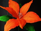 """Gumpaste Tiger Lily, 5.5"""" with 3 Wired Leaves"""