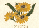 p283 FLOWER OF THE MONTH APRIL- DAISY