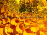 Droplets on Marigold