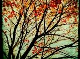Autumn's Alchemy