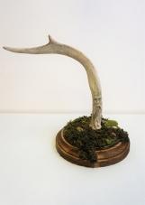 Carved Deer Antler Wood's Spirit