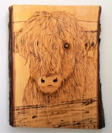 Pyrographed Young Steer