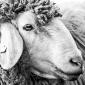 Forever Winding Wool
